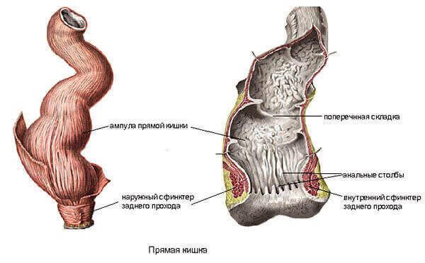 Мазь троксевазин при шейном остеохондрозе