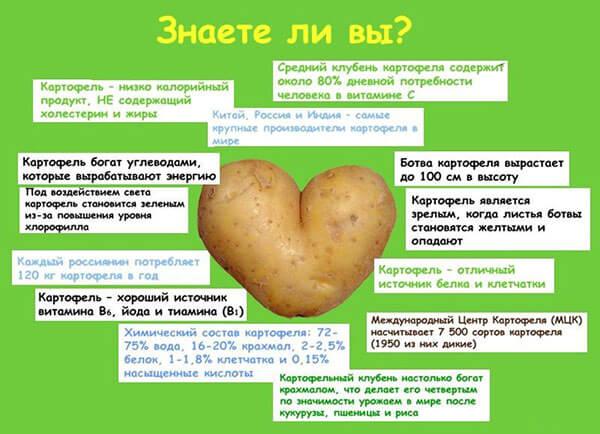 цвет картофеля от геморроя