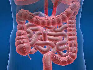 Нарушения работы кишечника - причина слизи в заднем проходе