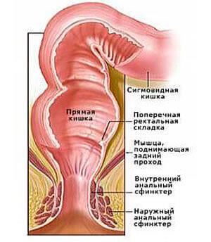 Сфинктеры прямой кишки
