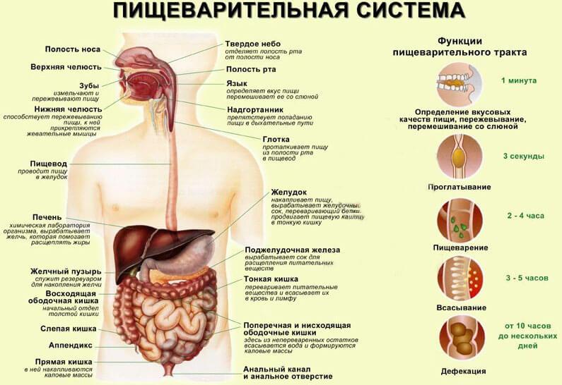 При любых ощущениях боли в ЖКТ следует обратиться к врачу