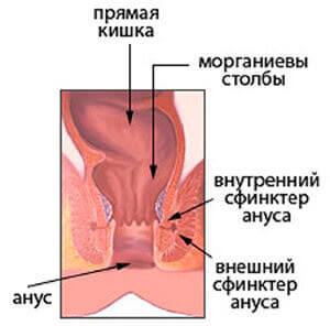 Внешний и внутренний сфинктер