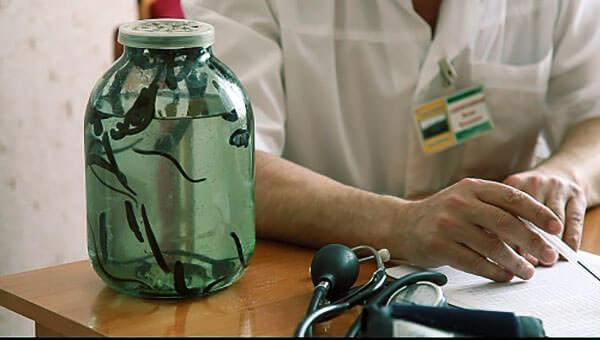 Для гирудотерапии используют только медицинские пиявки