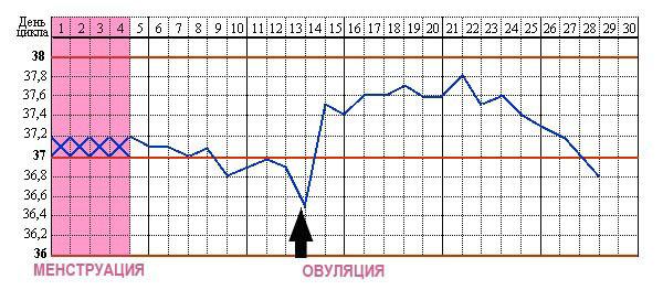 График базальной температуры перед месячными