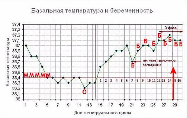 По показателям базальной температуры можно определить беременность