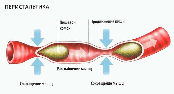 Орган человека