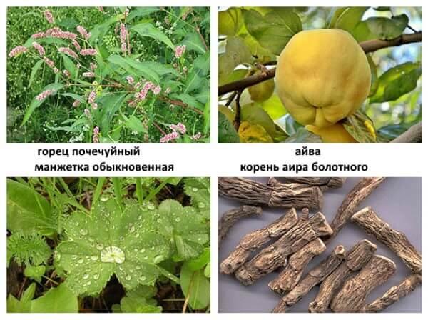 Растения, используемые народной медициной для лечения выпадения прямой кишки